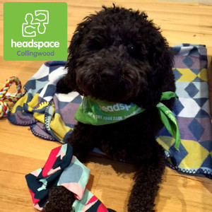Birdie, Therapy Dog at headspace Collingwood