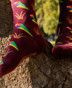 Soxy Beast - The Gouldian Style Socks